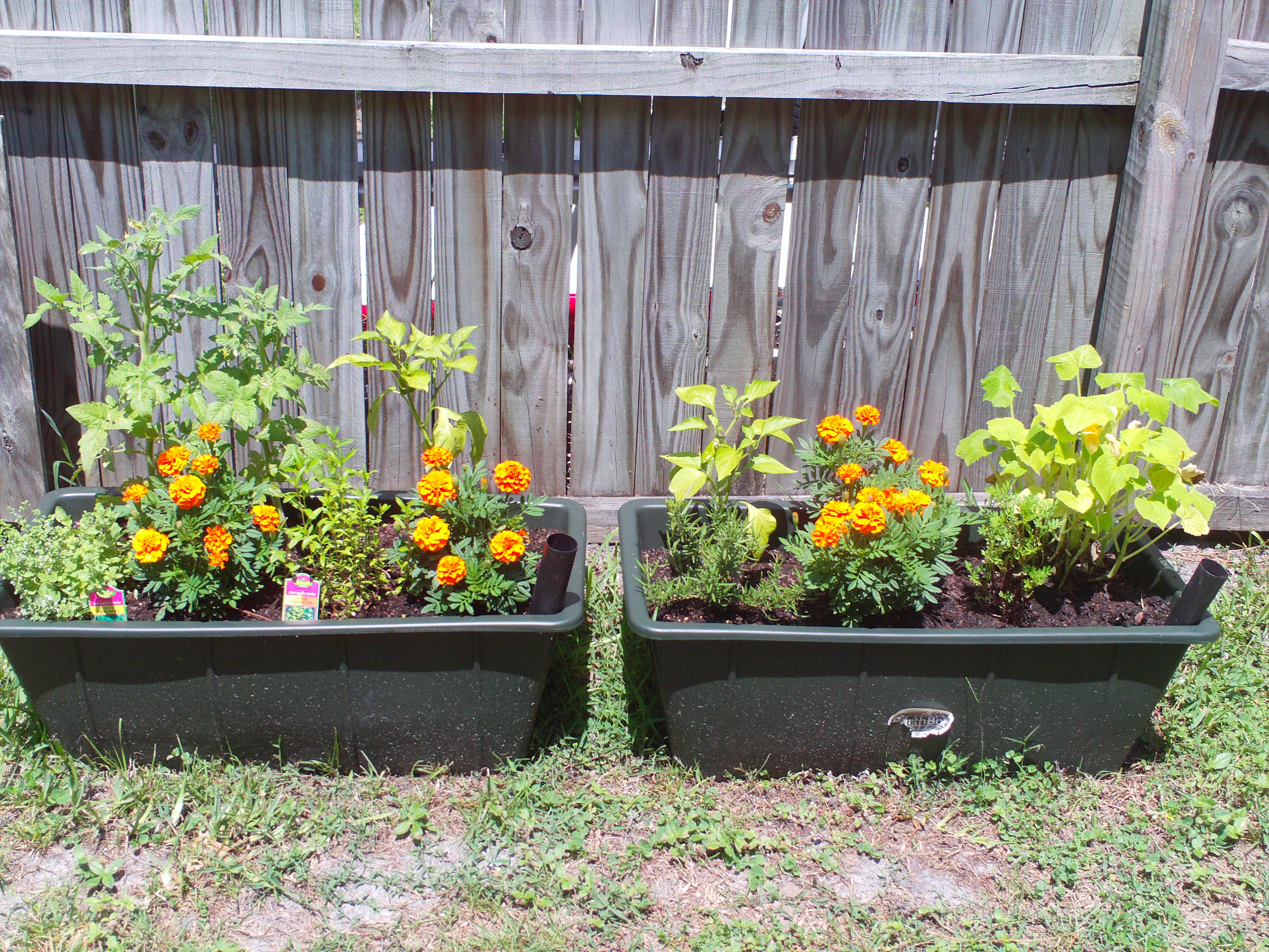 Starting a backyard vegetable garden - My Container Gardens Are Growing Cherry Tomatoes Mini Bell Peppers